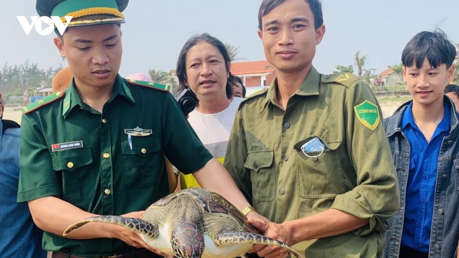 Thả cá thể đồi mồi quý hiếm nặng 15kg về biển