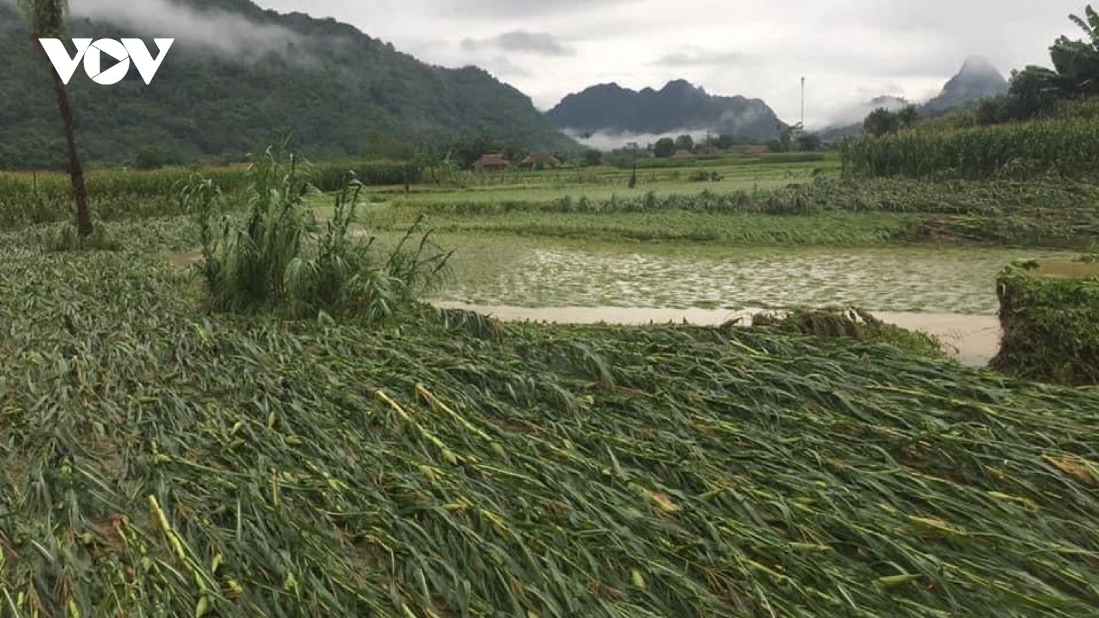 2 người ở huyện Lục Yên (Yên Bái) bị thương do sét đánh