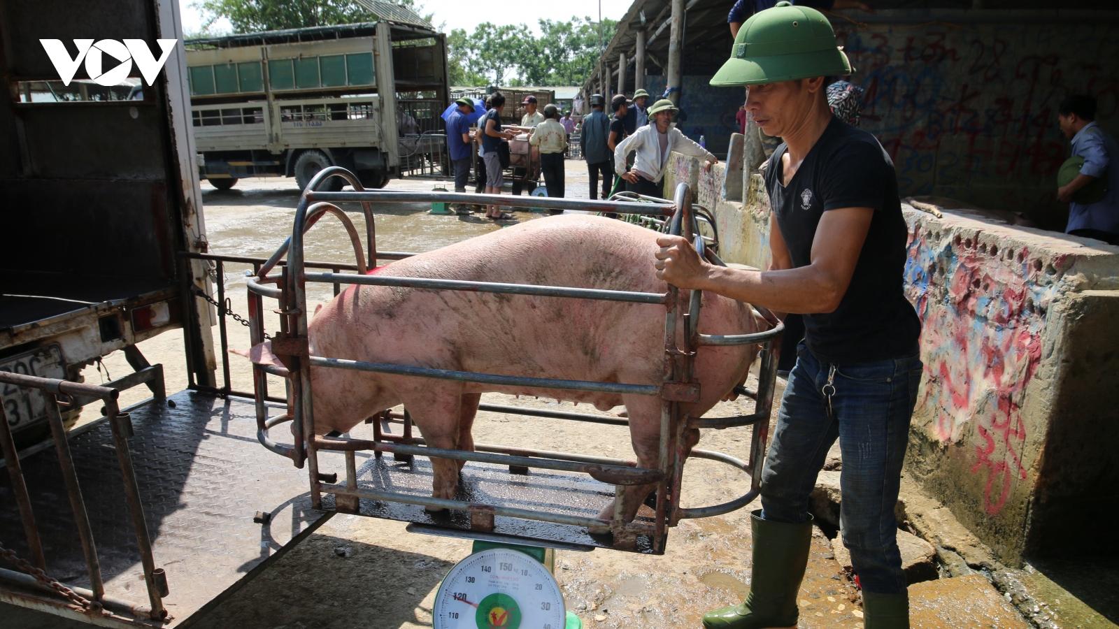"""Giá lợn hơi bắt đáy của năm, nhiều hộ chăn nuôi """"treo"""" chuồng"""