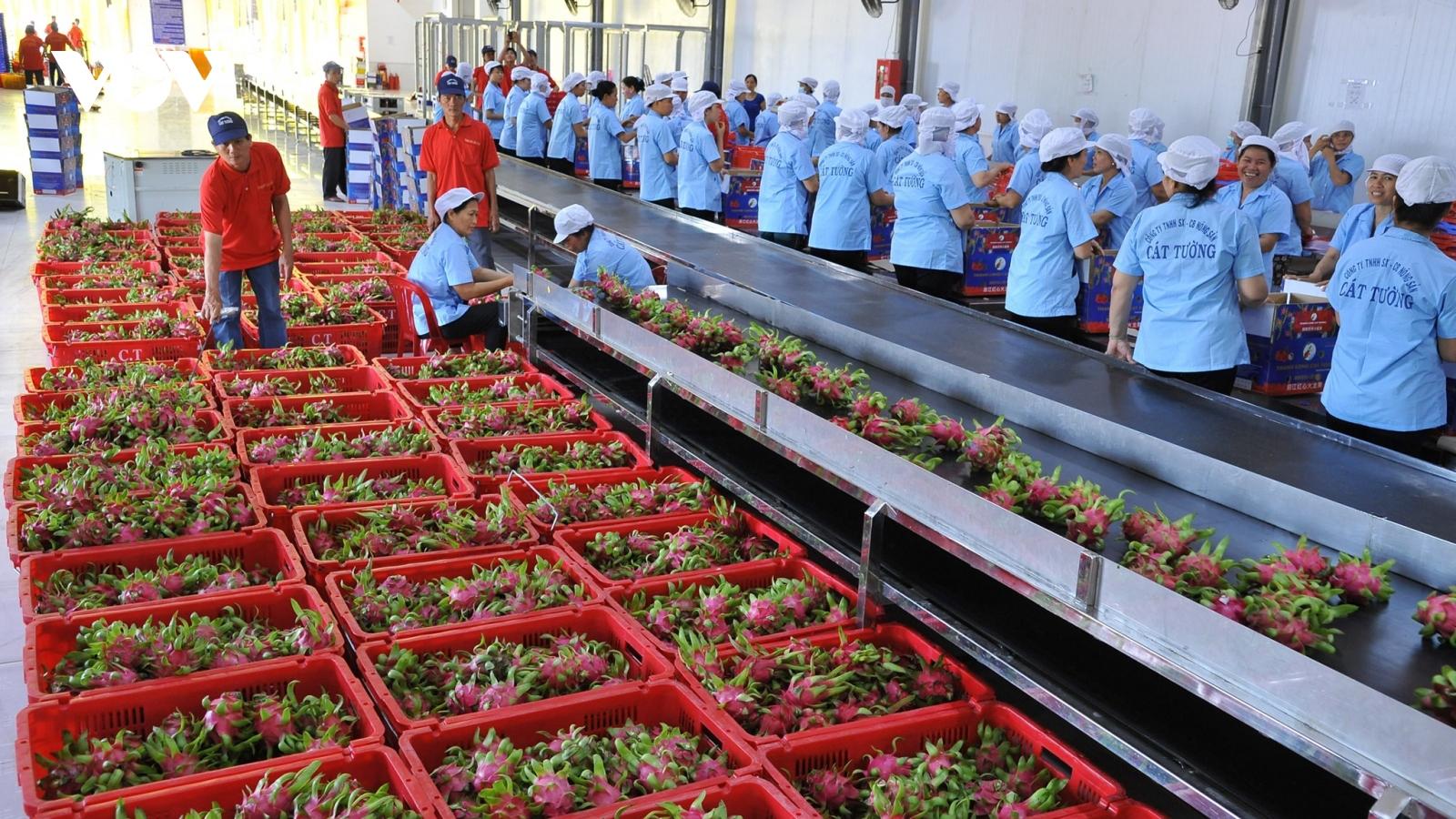 Khắc phục dịch Covid-19, doanh nghiệp xuất khẩu hơn 70 tấn trái cây mỗi ngày sang Mỹ, Hàn