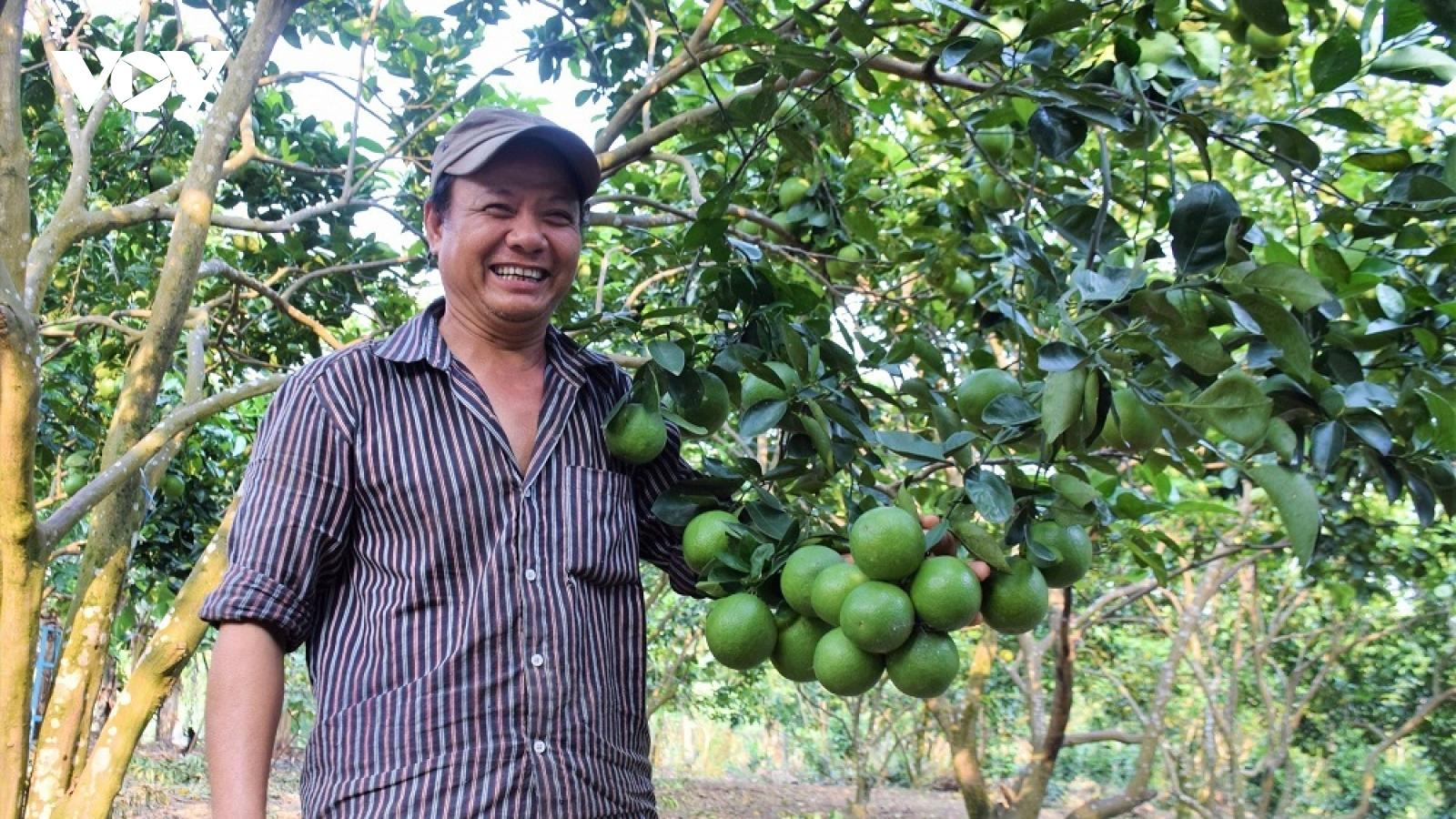 Cây ăn quả giúp người dân miền núi Quảng Nam làm giàu