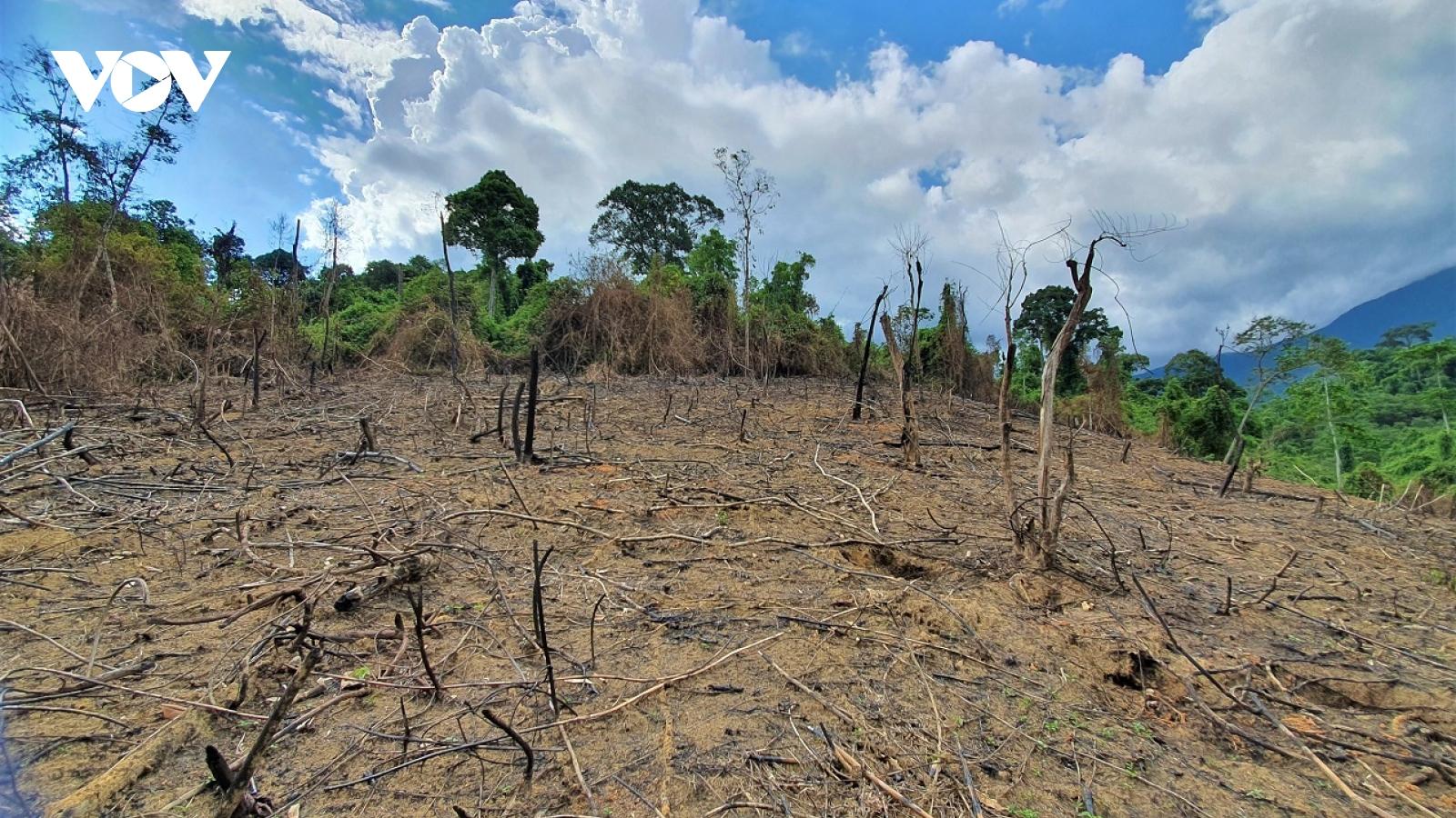 Cận cảnh 20 ha rừng ở Phước Sơn bị đốt cháy rụi