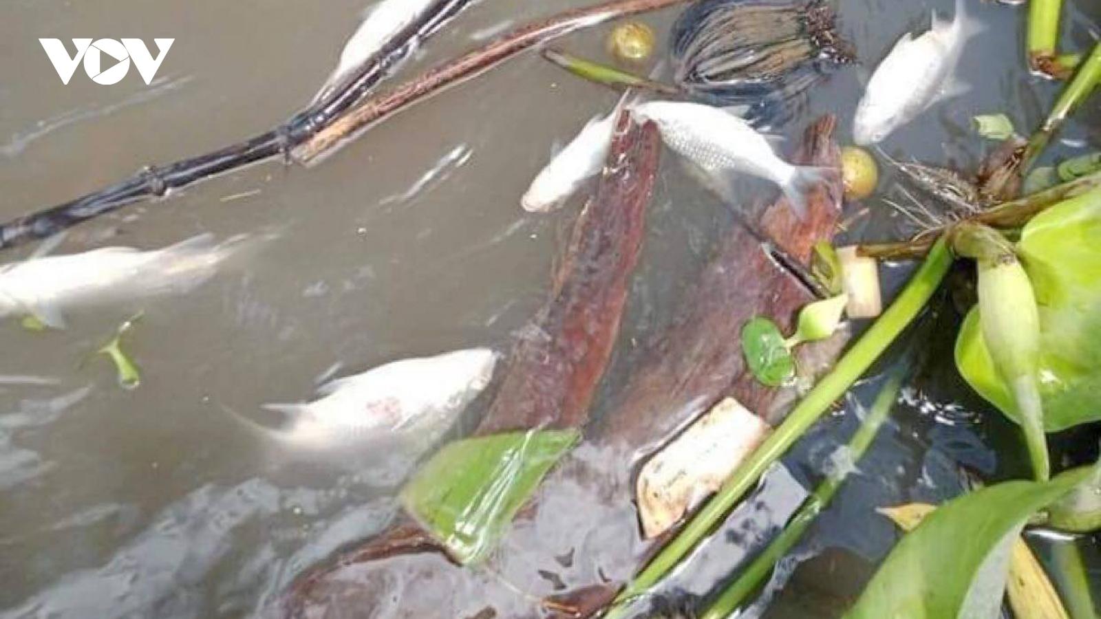 Cần Thơ tìm nguyên nhân cá chết bất thường trên sông