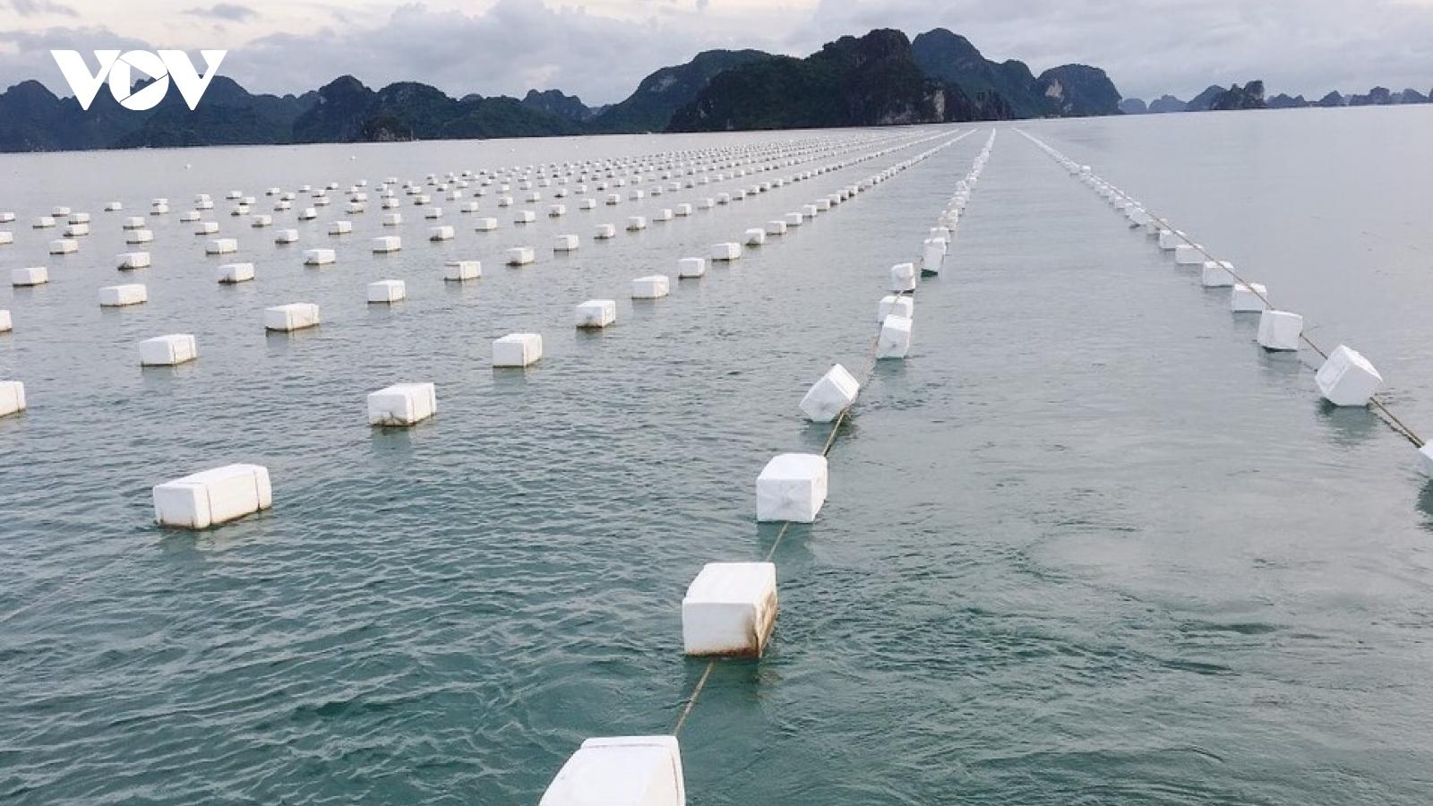 Nuôi trồng thủy sản sạch, bền vững: Cách làm mới ở Quảng Ninh