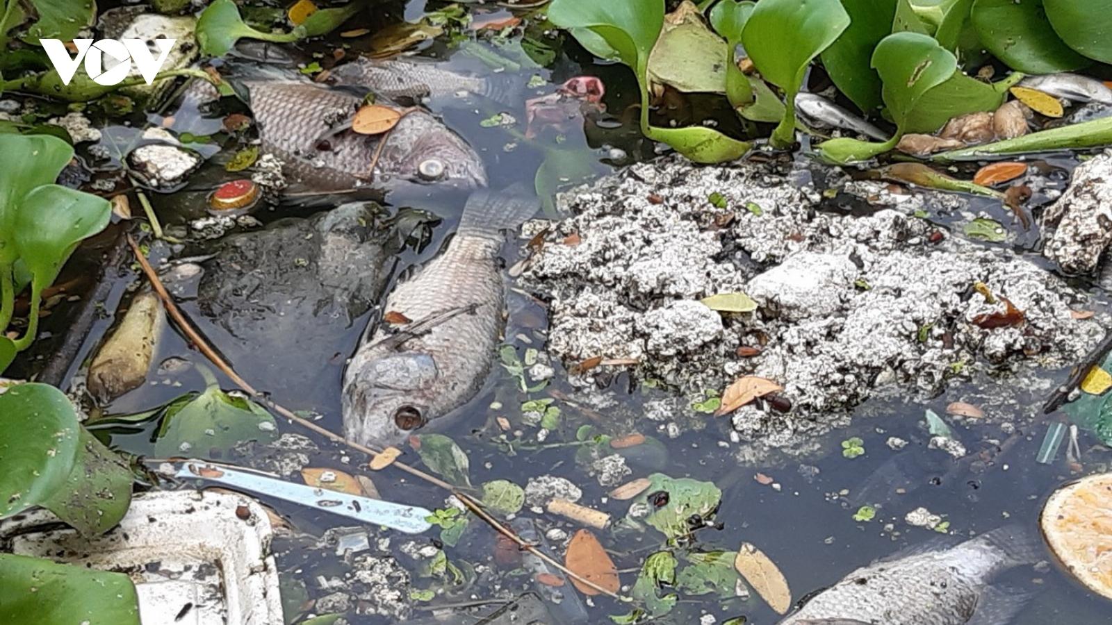 Cá lại chết trắng trên kênh Phú Lộc,Đà Nẵng