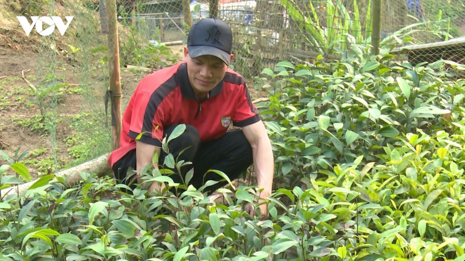 Trôi nổi nguồn cây giống phục vụ trồng rừng ở Bắc Kạn