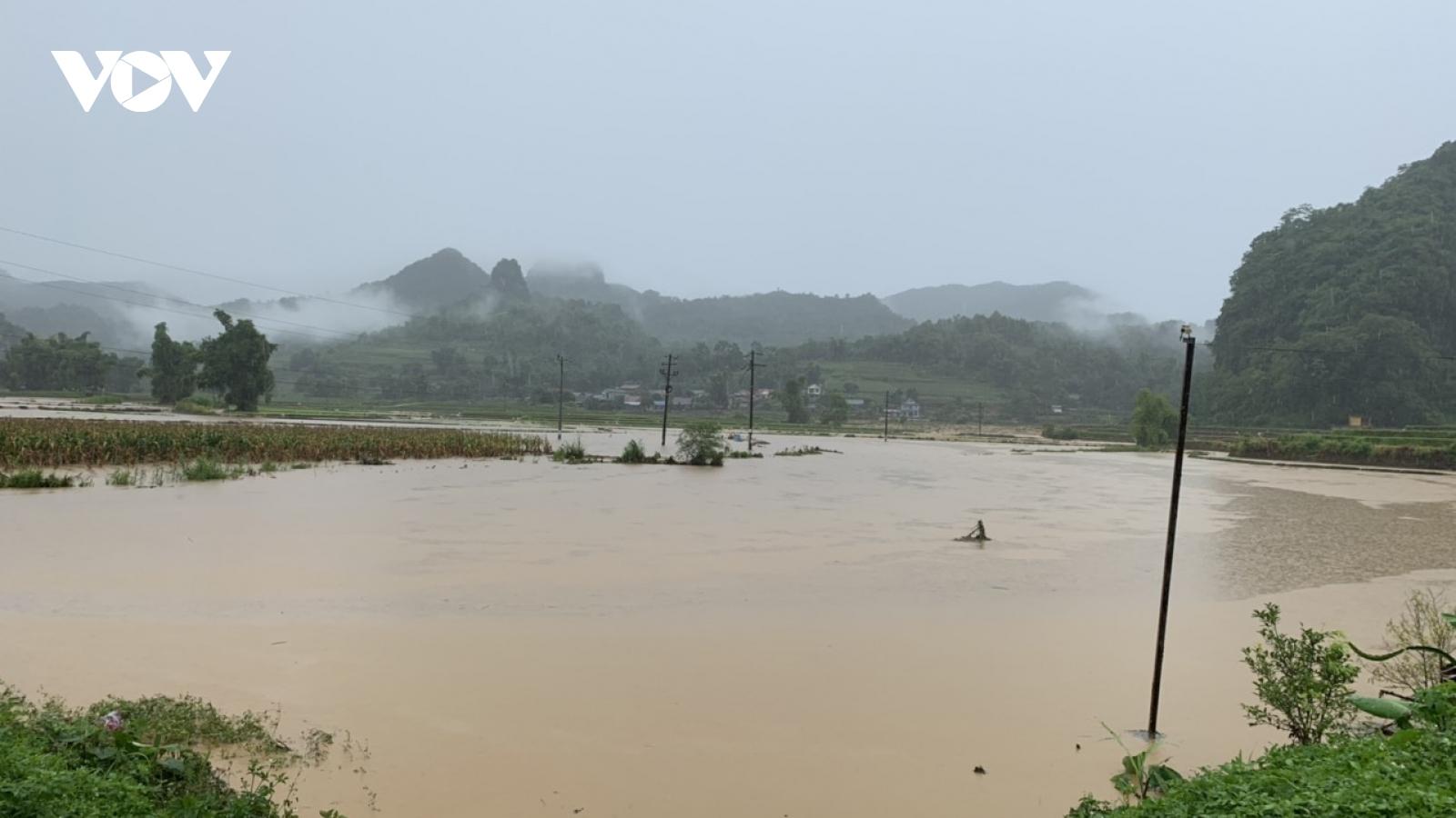Hơn 100 ha lúa mùa ở Bắc Kạn bị ngập úng và cuốn trôi do mưa lũ