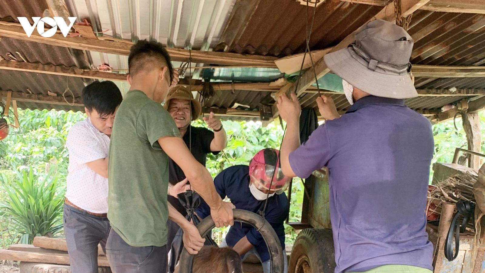 Dịch viêm da nổi cục trên trâu bò nguy cơ lan rộng ở Gia Lai