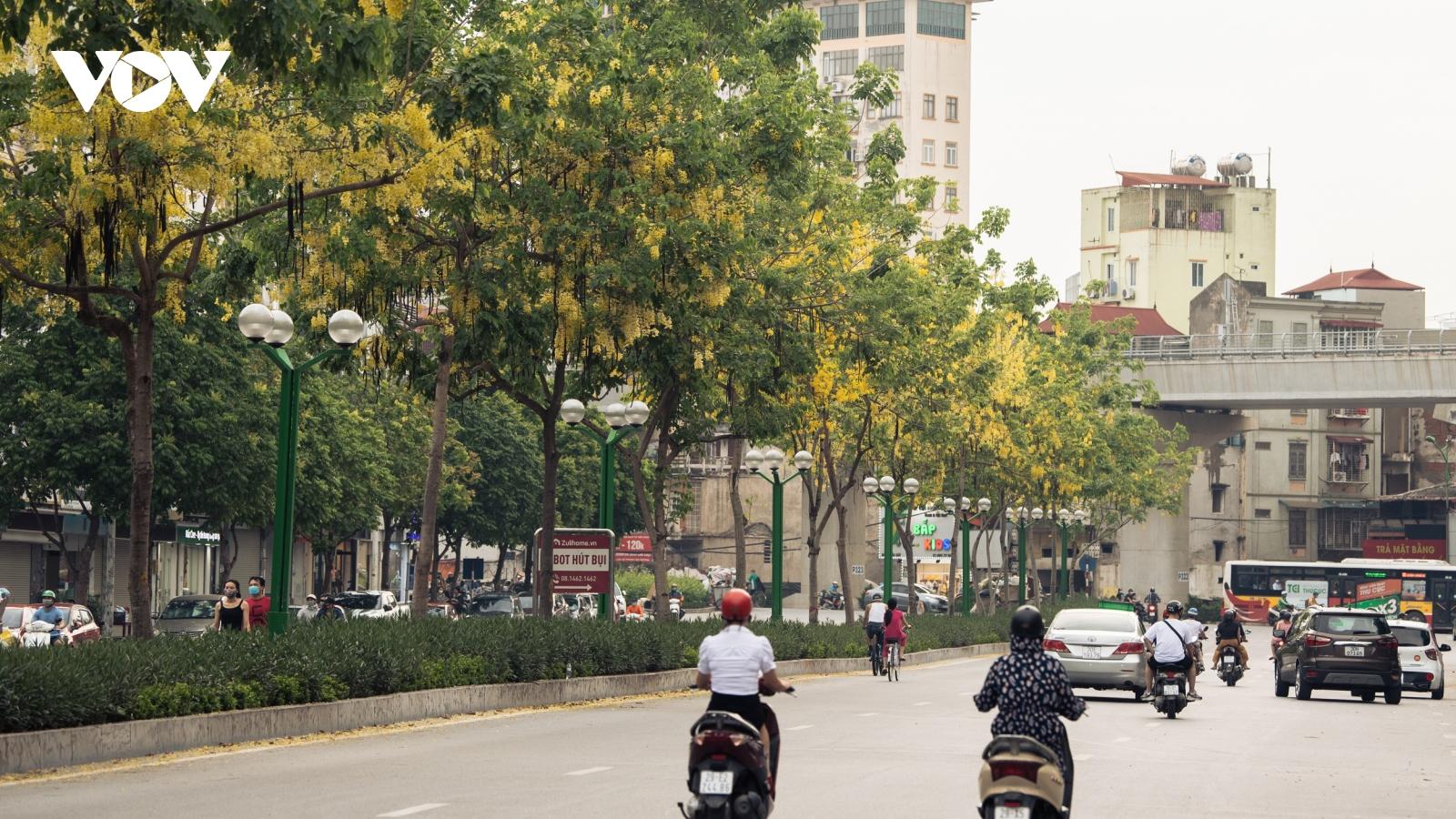 """Ngắm hoa muồng hoàng yến """"nhuộm vàng"""" góc phố Hà Nội"""