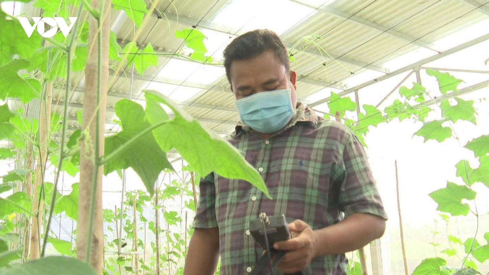 Ứng dụng năng lượng mặt trời vào sản xuất nông nghiệp mang lại hiệu quả cao