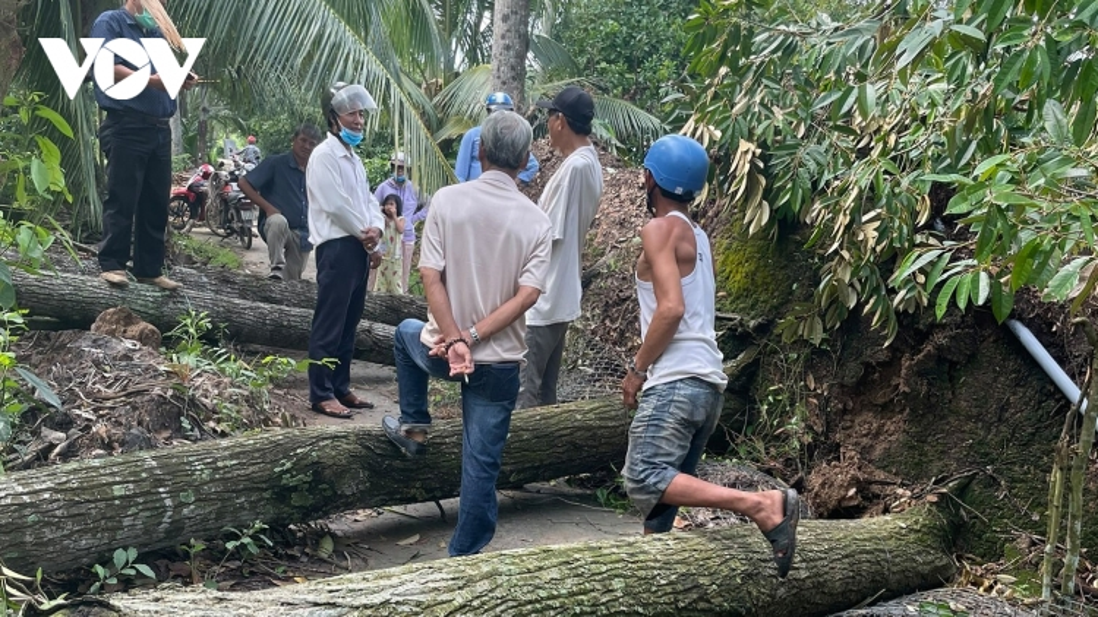 Gió lốc gây thiệt hại hàng chục nhà dân và đổ ngã nhiều vườn cây đặc sản tại Bến Tre