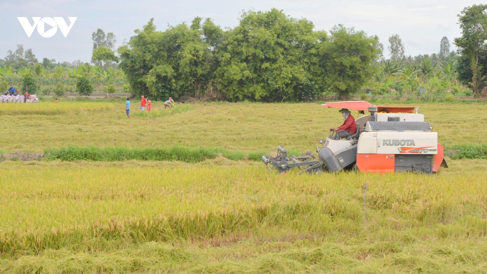 Liên kết hợp tác xã và doanh nghiệp nâng giá trị ngành hàng lúa gạo