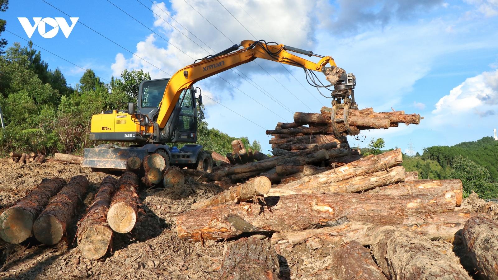 Được quy hoạch rừng phòng hộ, rừng thông trên đỉnh Pha Đin vẫn bị khai thác thác trái phép