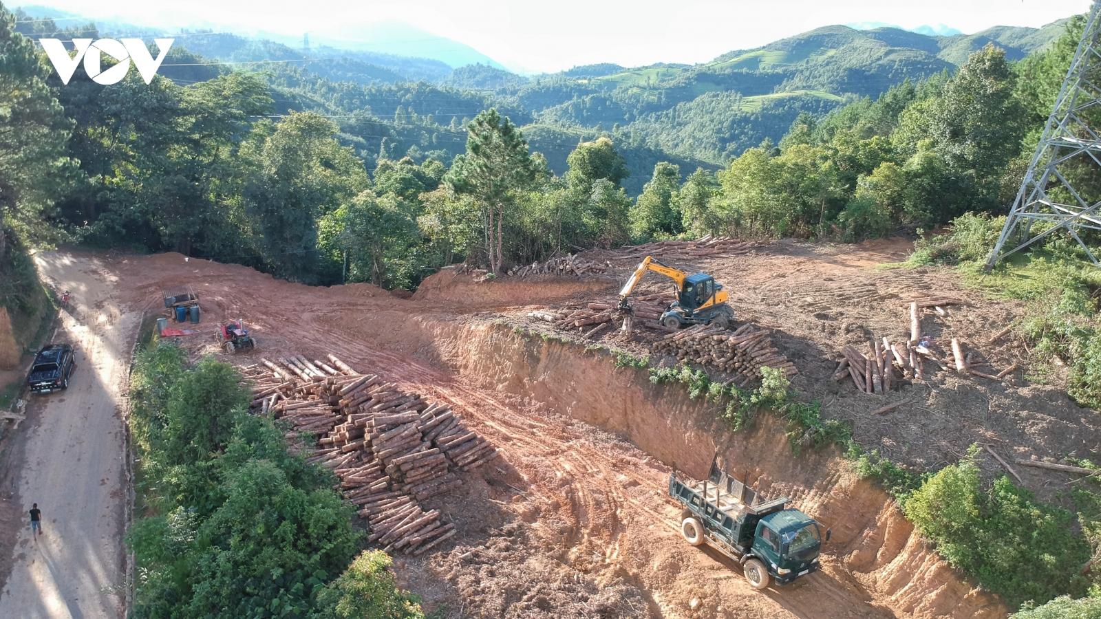 Phá rừng thông trên đỉnh Pha Đin: Liệu có sự tiếp tay, thỏa hiệp ngầm củacơ quan quản lý?