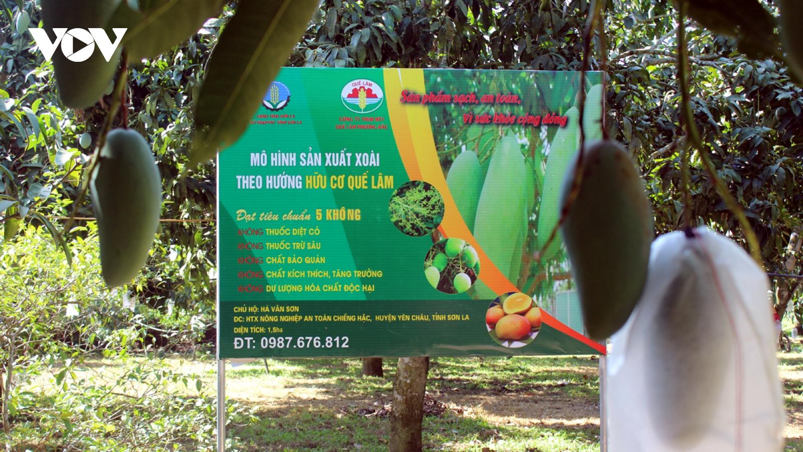 Nhiều hộ trồng cây ăn quả ở Sơn La có doanh thu hơn 200 triệu đồng/ha
