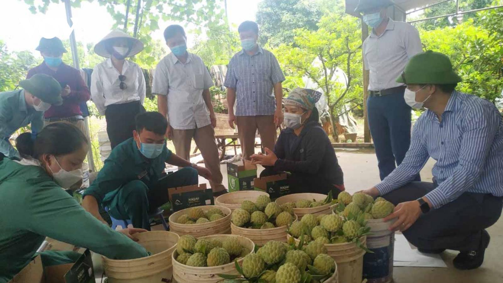 Bố trí điểm xét nghiệm Covid-19 tập trung cho lái xe thu mua na tại Đông Triều,Quảng Ninh