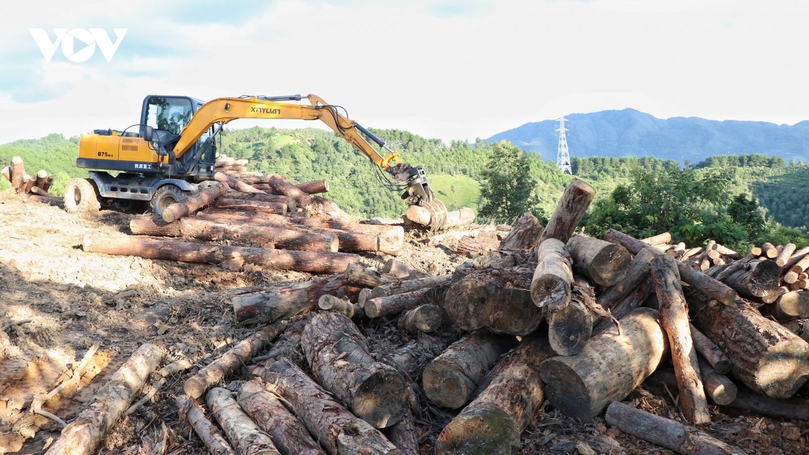Tạm đình chỉ Hạt trưởng Hạt Kiểm lâm Tuần Giáo liên quan việc phá rừng phòng hộ