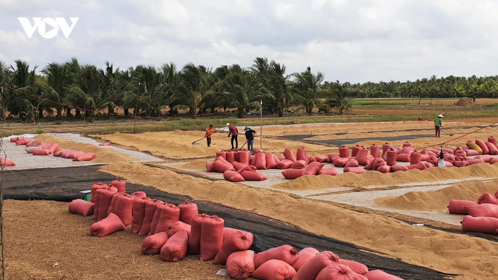 Chính quyền và doanh nghiệp chung tay không để đứt gãy chuỗi ngành hàng lúa gạo