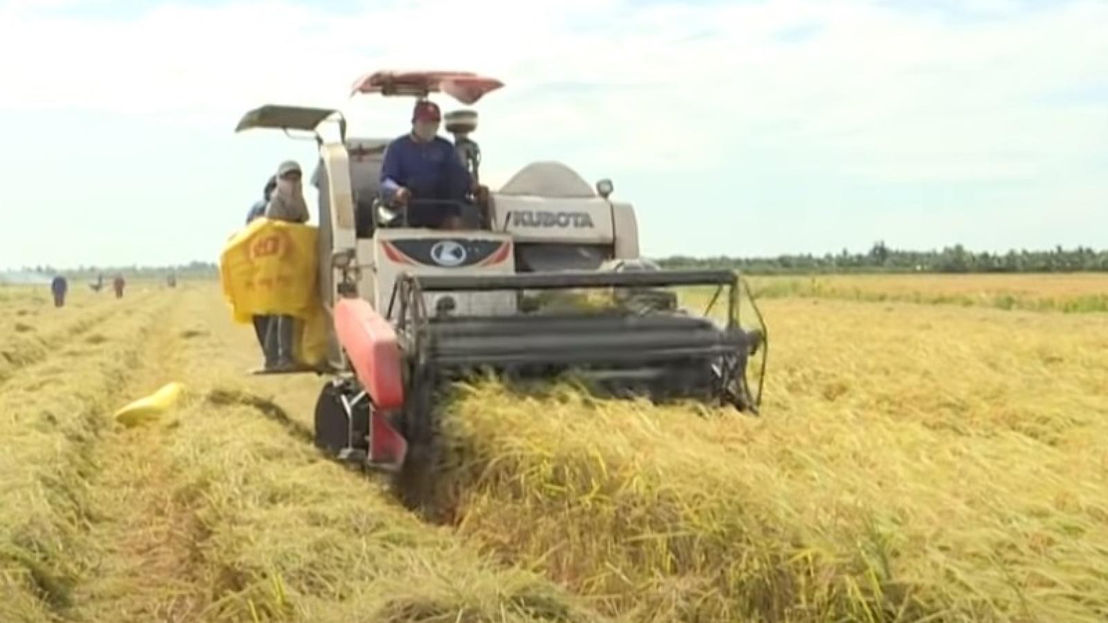 Gánh nặng đè lên vai người dân khi giá phân bón tăng, giá lúa giảm