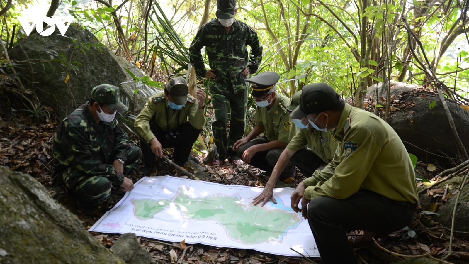 Đà Nẵng tăng cường phòng chống cháy rừng trong mùa nắng nóng gay gắt