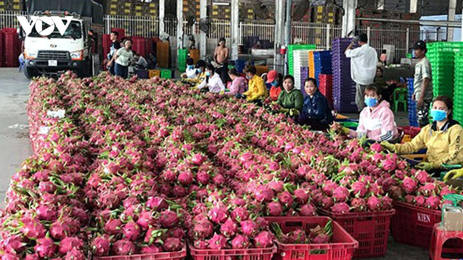 Thanh long Việt Nam còn nhiều lợi thế trên thị trường quốc tế