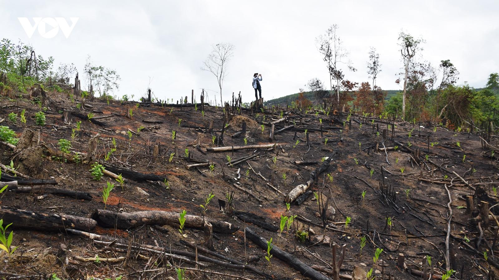 Rừng phòng hộ Phú Yên bị tàn phá, chủ rừng không biết?