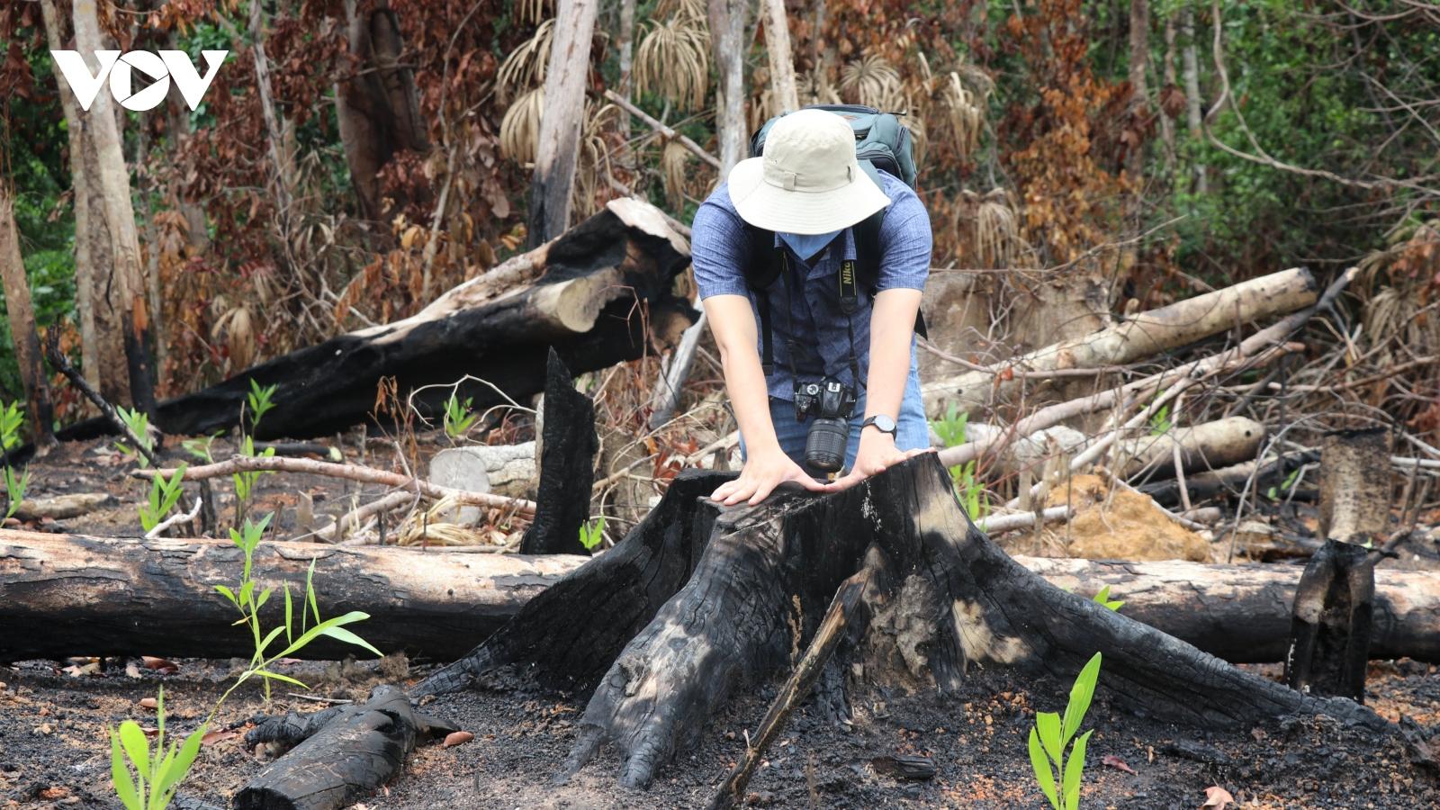 Phú Yên yêu cầu làm rõ thông tin vụ phá rừng phòng hộ ở huyện Sơn Hòa
