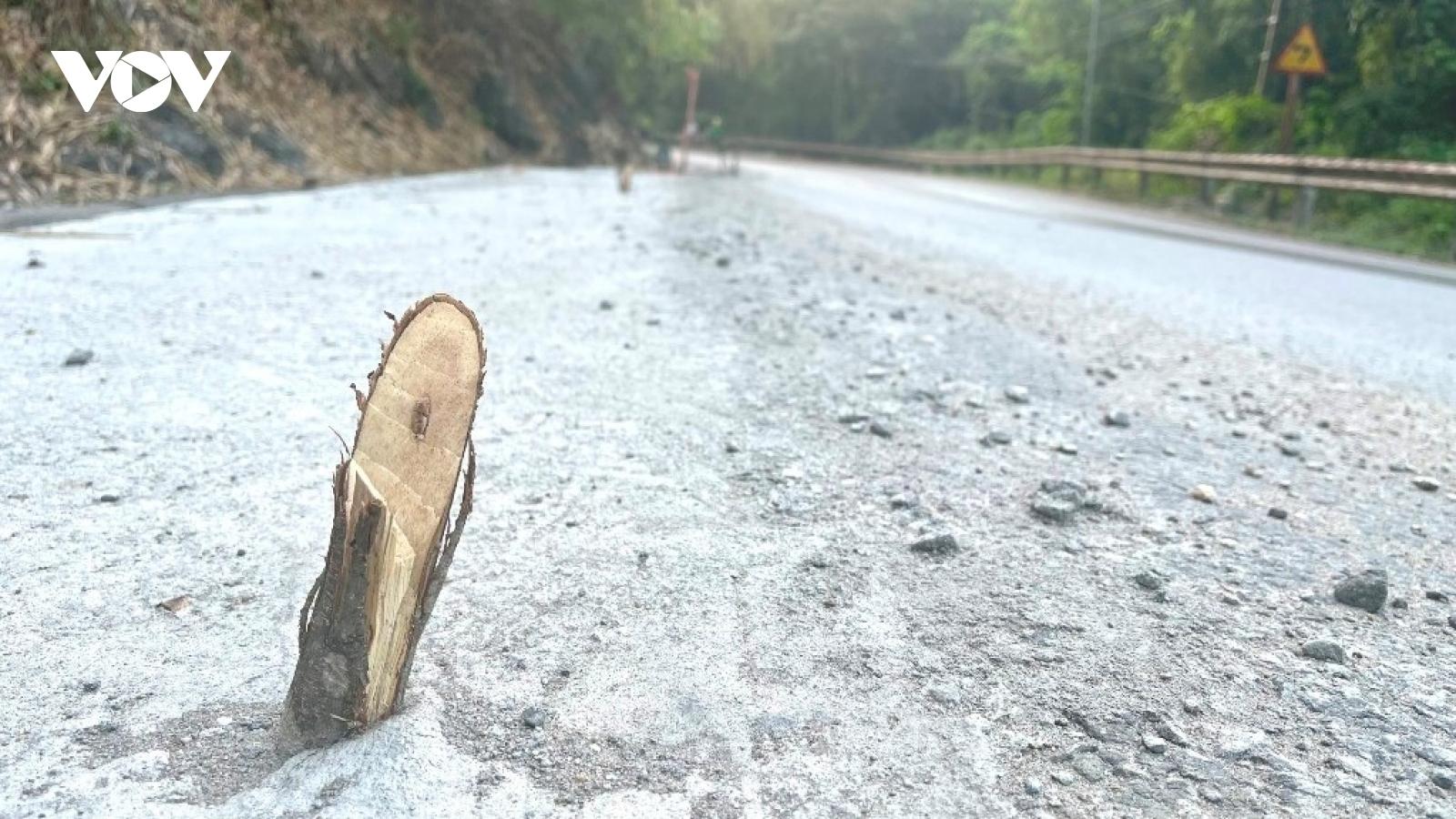 """Bất an trước hàng loạt """"cây chông"""" trên tỉnh lộ 171 ở Yên Bái"""