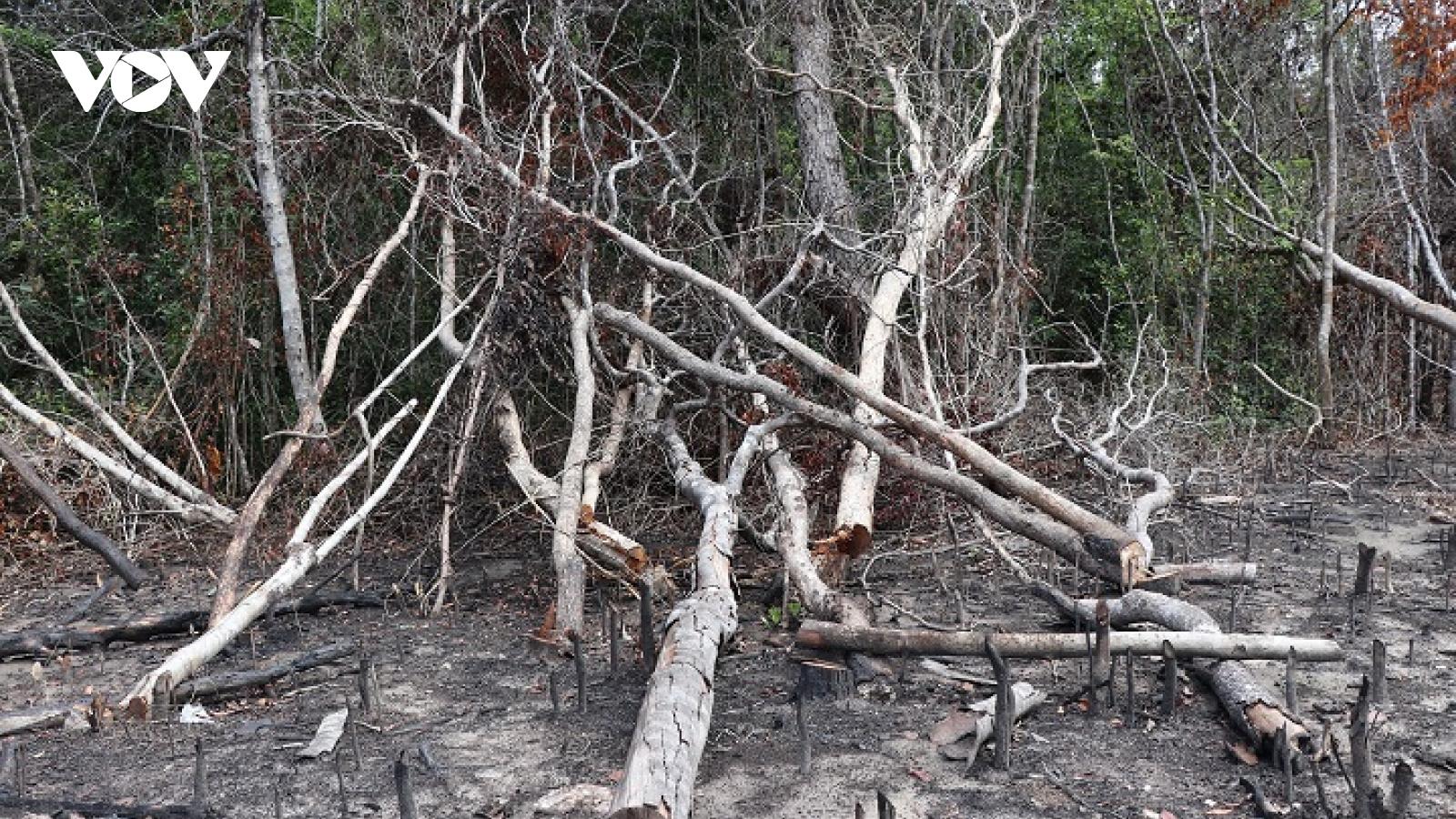Rừng tự nhiên tại khu di tích lịch sử Hội trường Mùa Xuân (Phú Yên) bị xâm hại
