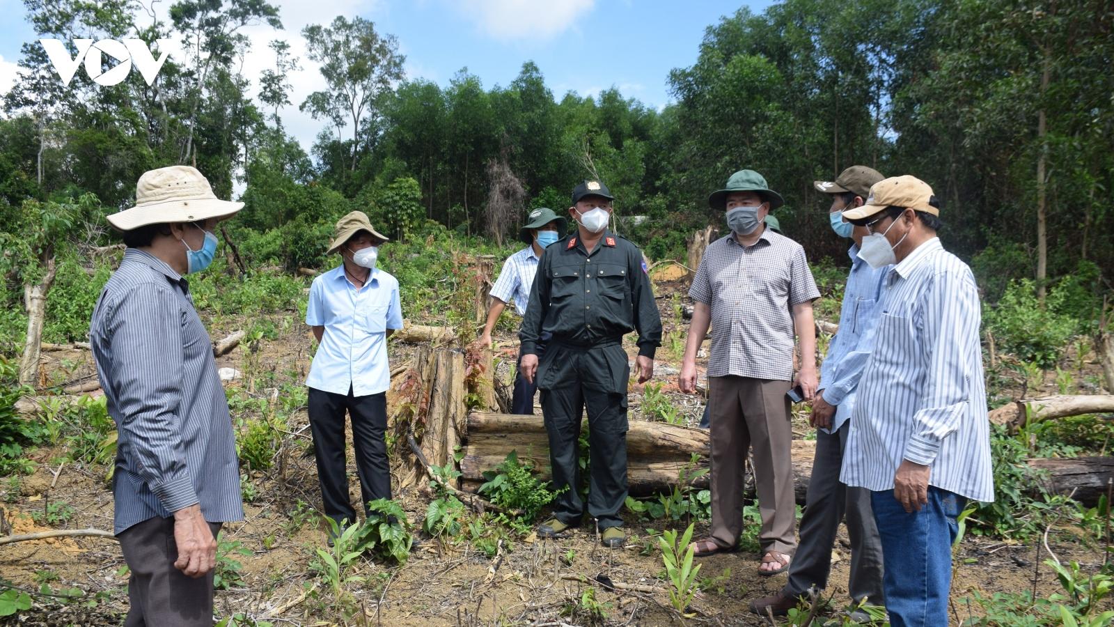Tỉnh ủy Phú Yên yêu cầu xử lý nghiêm các cá nhân, đơn vị liên quancác vụ phá rừng