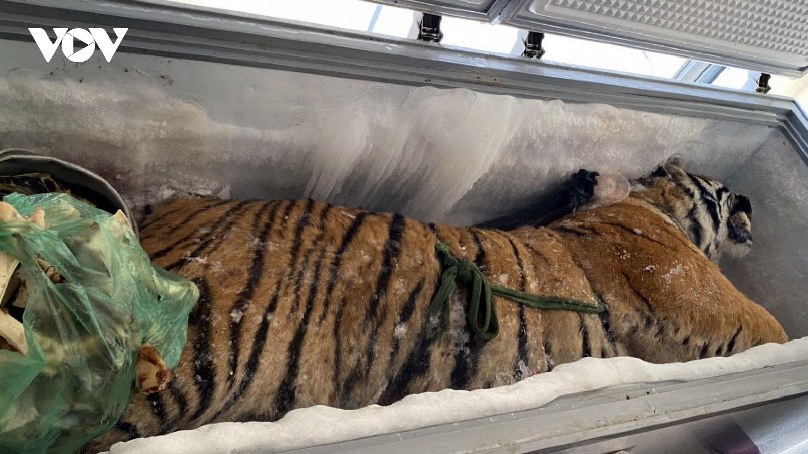 """Khởi tố đối tượng tàng trữ """"xác ướp"""" hổ nặng 160 kg"""