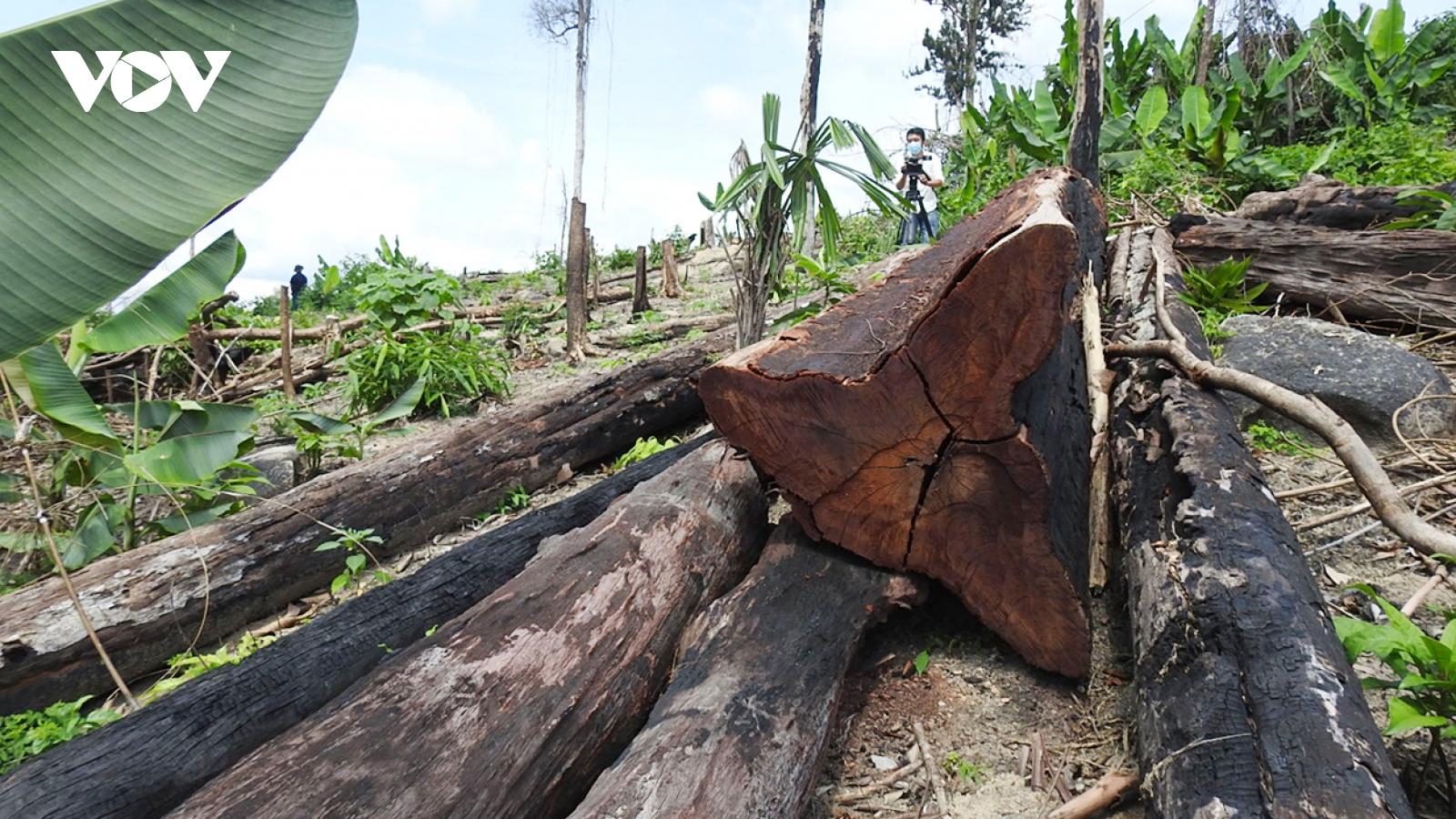 Kon Tum xác định được đơn vị quản lý hơn 17ha rừng bị phá ở huyện biên giới Ia H'Drai