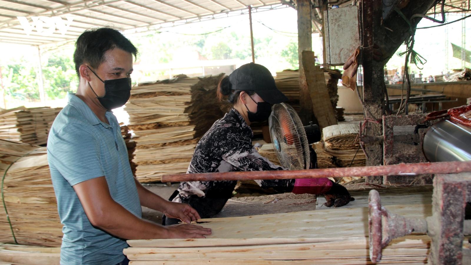 """Người dân Yên Bái đang """"sống khỏe"""" nhờ gỗ rừng trồng"""