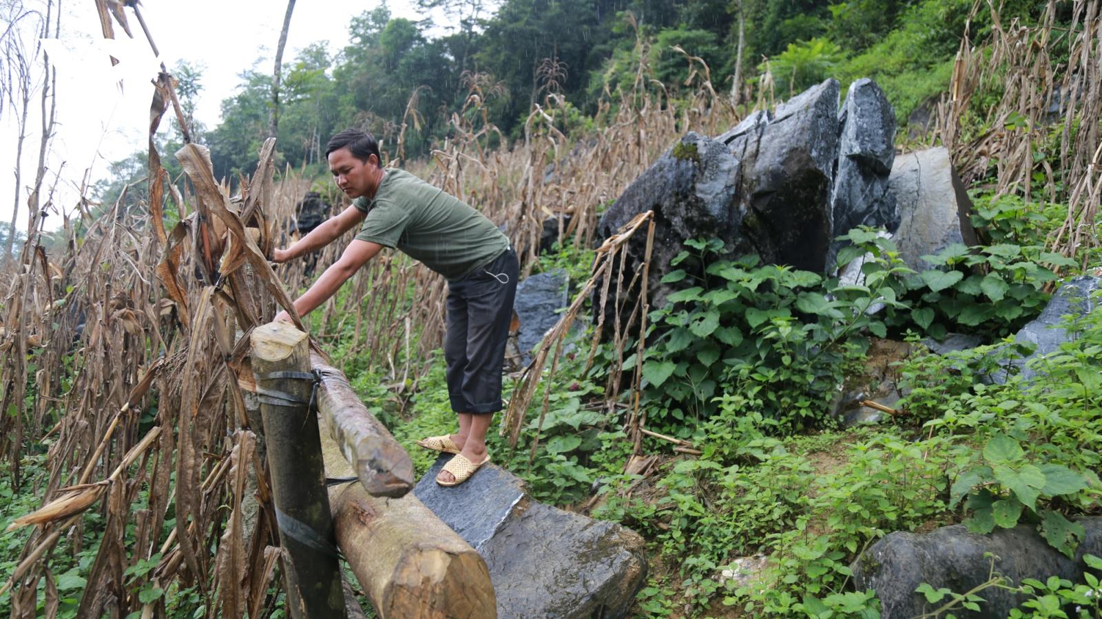 Hỏa tốc di dời 16 hộ dân ở Mường Khương (Lào Cai) ra khỏi chân núi đá lăn