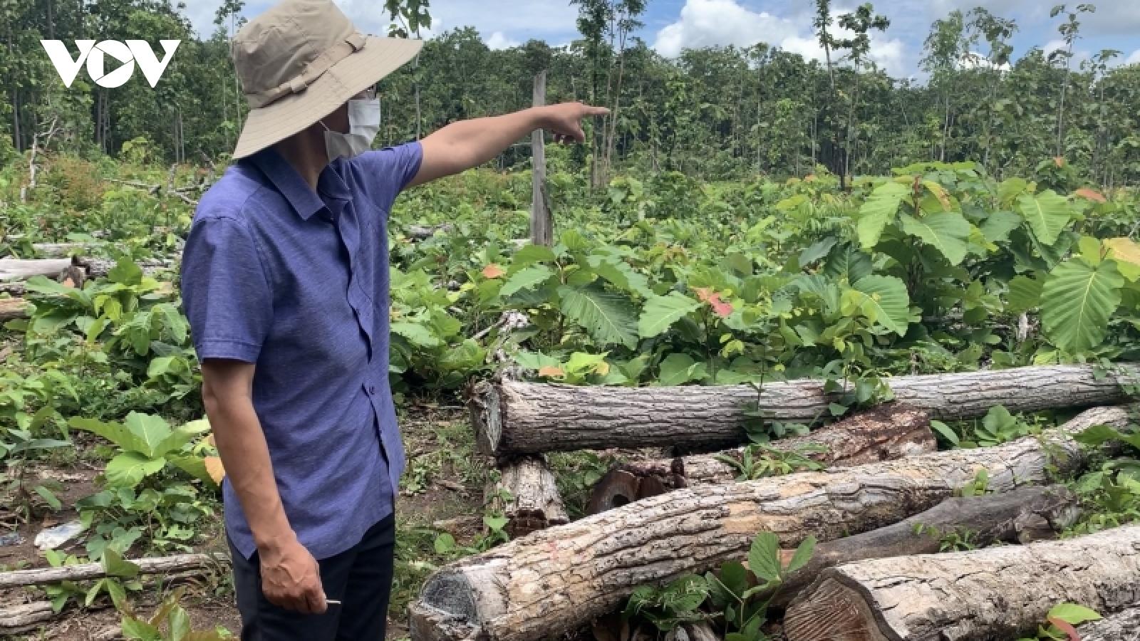 Nhập nhằng gỗ lậu nằm la liệt tại Trung tâm bảo tồn voi Đắk Lắk