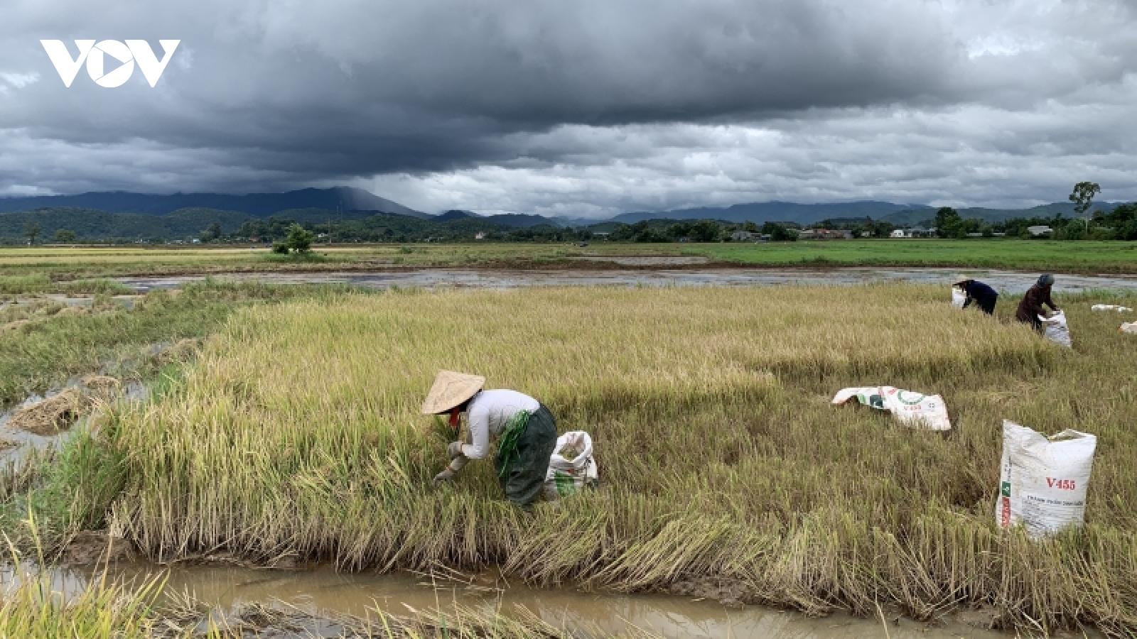 Đắk Lắk thiệt hại khoảng 157 tỷ đồng trong 9 tháng vì thiên tai