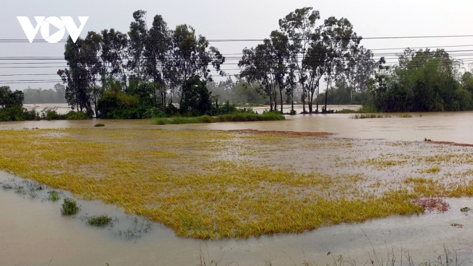Hơn 1.000 ha lúa thiệt hại do ảnh hưởng của bão số 5