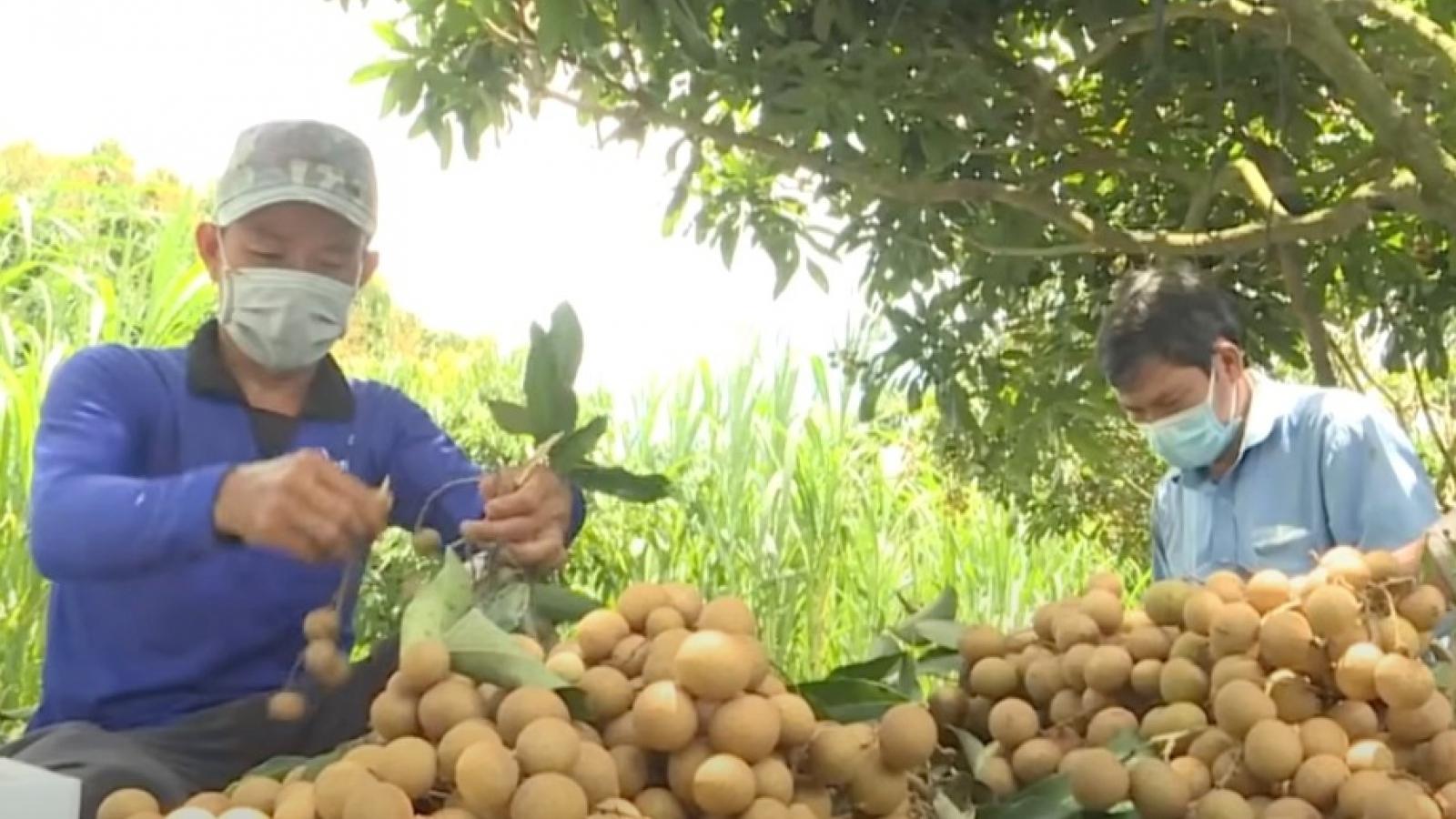 Nông dân Đồng Tháp thay đổi tư duy tiêu thụ nông sản trong mùa dịch