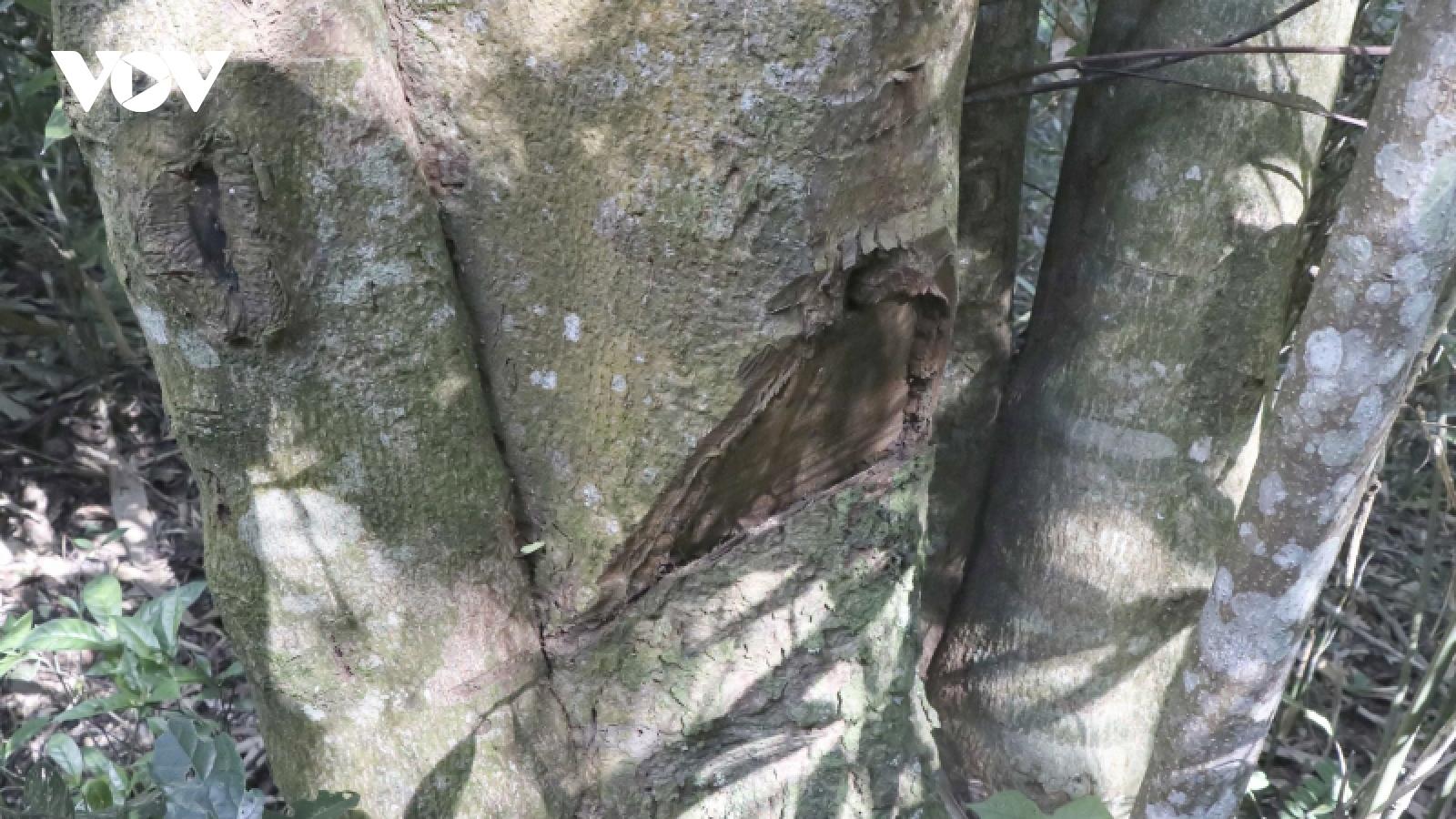 Gian nan cuộc chiến giữ rừng ở vùng cao Nà Nhạn