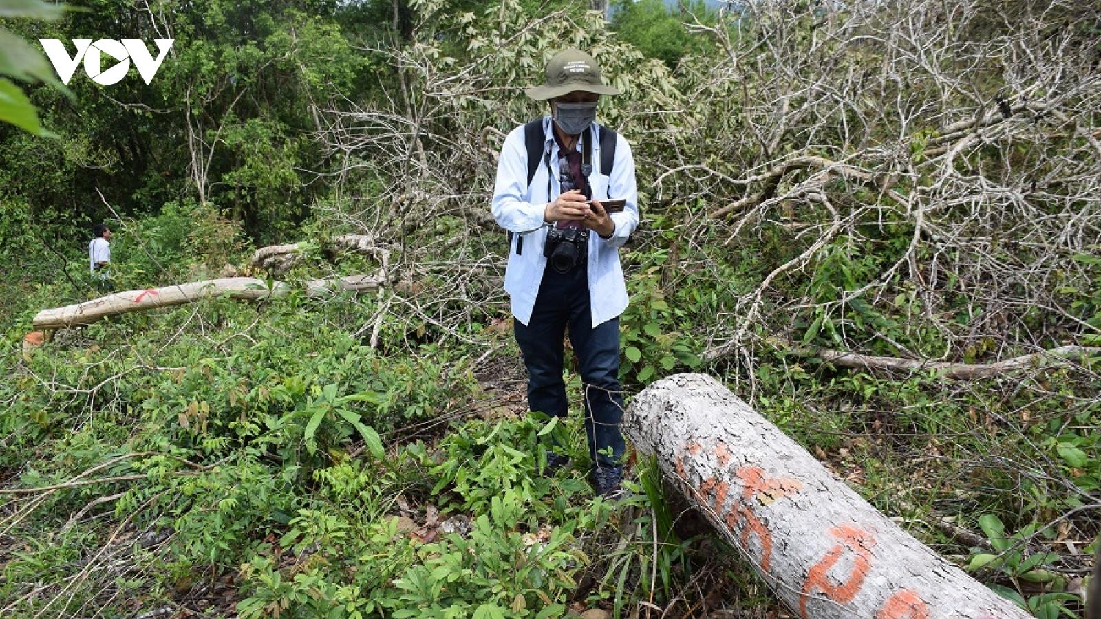Khởi tố vụ phá rừng phòng hộ ở huyện Sơn Hòa, Phú Yên