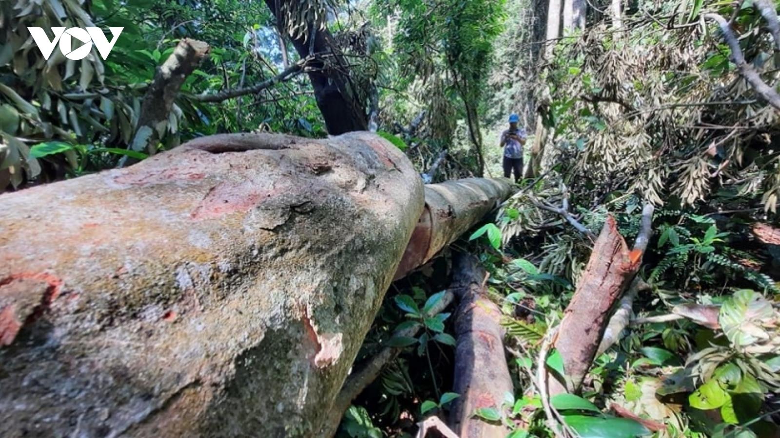 Khẩn trương hoàn chỉnh hồ sơ, khởi tố vụ án phá rừng ở xã Trà Bui (Quảng Nam)