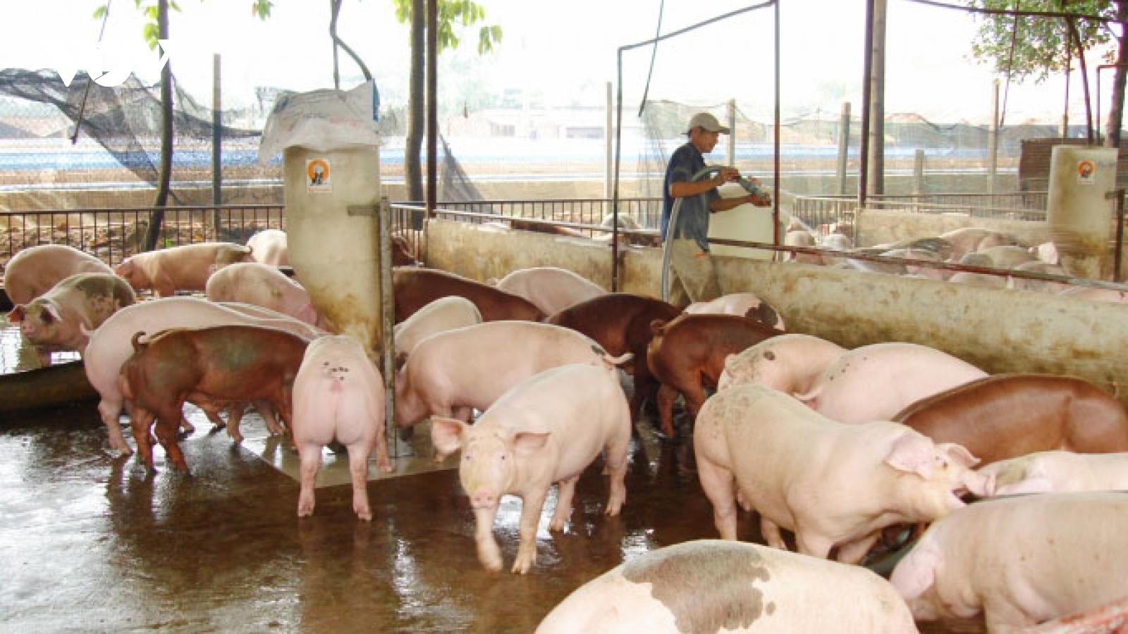 Ngành chăn nuôi ở Thái Nguyên chồng chất nỗi lo