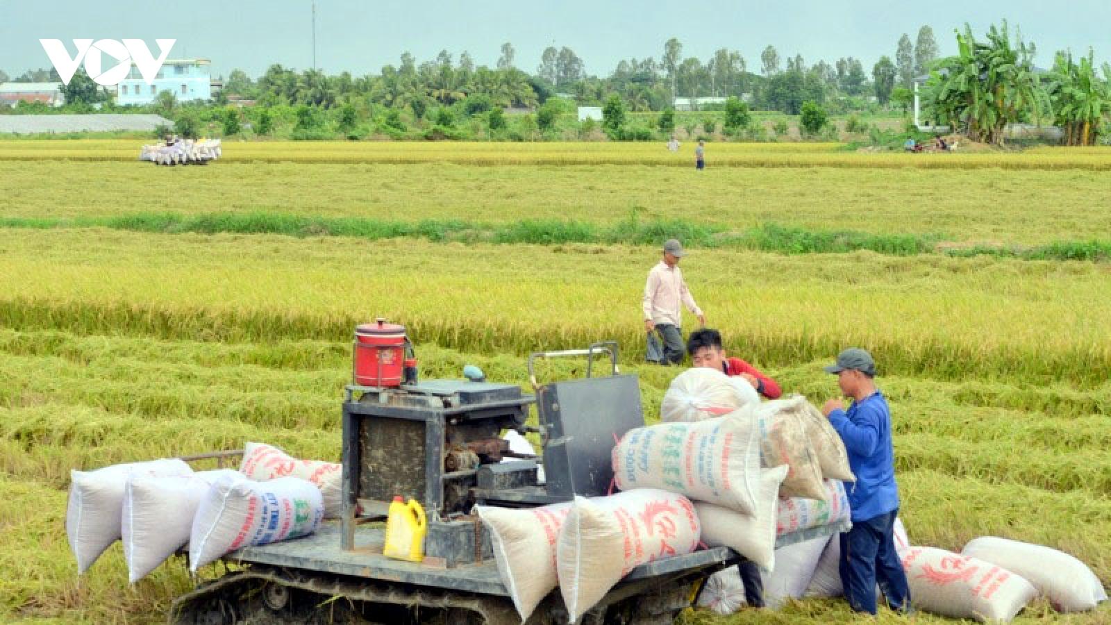 """Giá xuất khẩu tănglàm """"ấm"""" thị trường lúa gạo miền Tây"""
