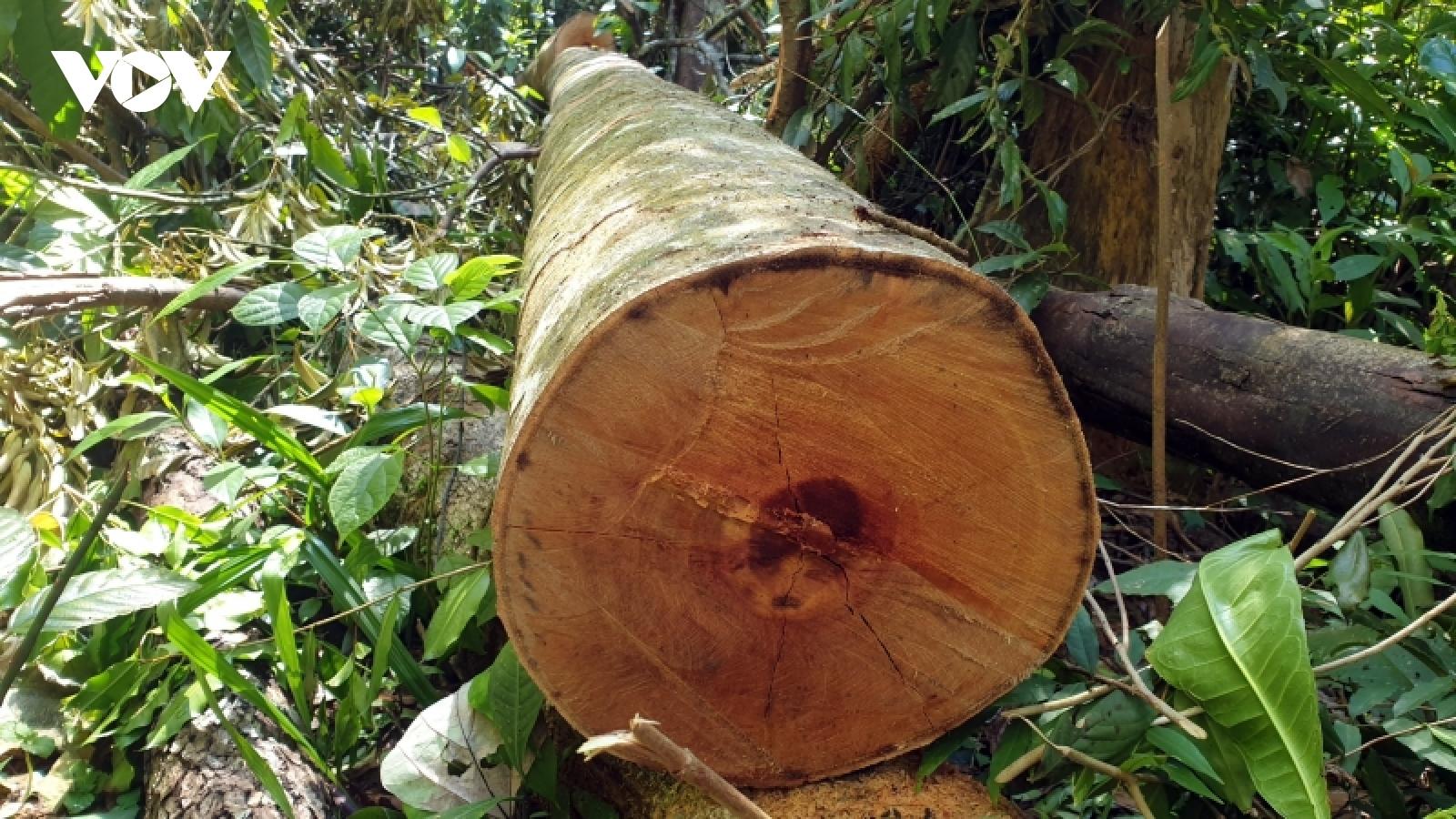 Lãnh đạo tỉnh Quảng Nam: Vụ phá rừng phòng hộ ở xã Trà Bui là rất đau xót