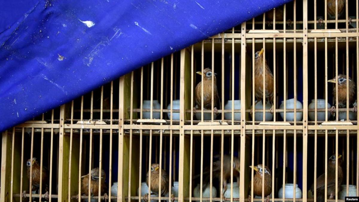 Ngoại trưởng Mỹ kêu gọi Trung Quốc đóng cửa các chợ động vật hoang dã.jpg