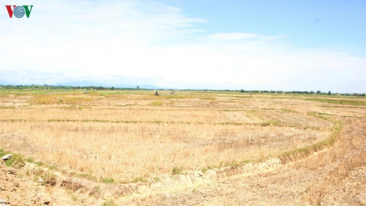 Đồng ruộng khô hạn do nắng nóng kéo dài ở Quảng Trị.