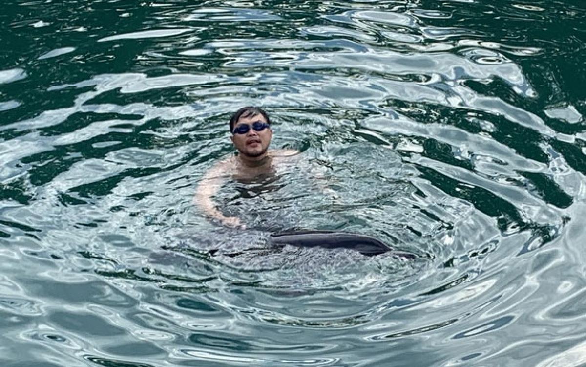 Lực lượng cứu hộ tìm cách cứu, dìu cá heo đưa ra khỏi bờ biển Đà Nẵng.