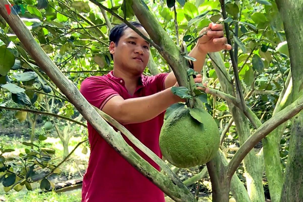 vov_anh_tran_thanh_tuan_ti_mi_cham_soc_buoi_de_dat_chat_luong_tot_nhat_pwnw.jpg