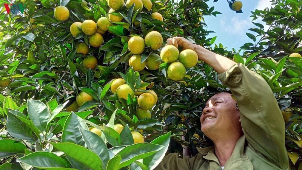 Nhiều sản phẩm nông sản của Sơn La có cơ hội chinh phục thị trường EU.