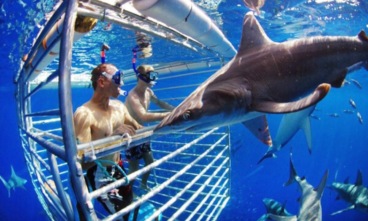 Bơi cùng cá mập, Hawaii